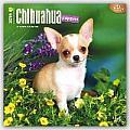 Chihuahua Puppies 2016 Calendar