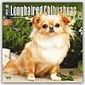 Longhaired Chihuahuas 2016 Calendar
