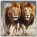 Lions 2016 Calendar