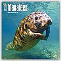Manatees 2016 Calendar
