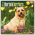 Norfolk Terriers 2016 Calendar