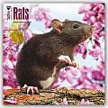 Rats 2016 Calendar