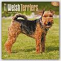 Welsh Terriers 2016 Calendar