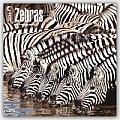 Zebras 2016 Calendar