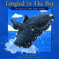 Tangled in the Bay: The Story of a Baby Right Whale