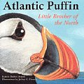 Atlantic Puffin - Little Brother of the North