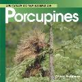 Welcome To The World Of Porcupines