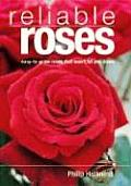 Reliable Roses Easy To Grow Roses That Wont Let You Down