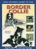 Dog Owners Guide To The Border Collie