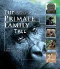Primate Family Tree The Amazing Diversity of Our Closest Relatives