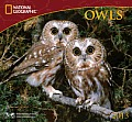 Owls: National Geographic 2013 Wall Calendar Cover