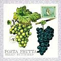 Posta Frutta - Postcard Book