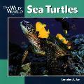Our Wild World Sea Turtles
