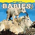 Glacier Babies (Large Print)