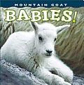 Mountain Goat Babies