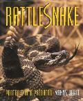 Rattlesnake: Rattlesnake