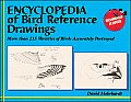 Encyclopedia of Bird Reference Drawings More Than 215 Varieties of Birds Accurately Portrayed