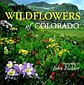Wildflowers Of Colorado