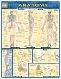 Anatomy Laminate Reference Chart...