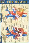 Heart Quickstudy Pocketsize Medical Guide