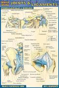 Joints & Ligaments Laminate Reference Chart (Pocket)