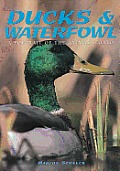 Ducks & Waterfowl (Portrait of the Animal World)