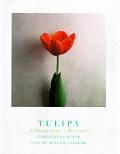 Tulipa A Photographers Botanical