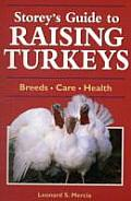 Raising Turkeys (Storey's Guides to Raising)