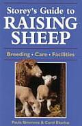Raising Sheep (Storey's Guides to Raising)