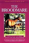 Understanding The Broodmare