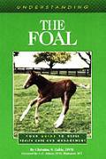 Understanding The Foal