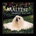 The Maltese: Diminutive Aristocrat (Howell Best of Breed)