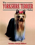 Yorkshire Terrier Today