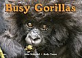 Busy Gorillas