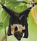 Bats (Living Wild)