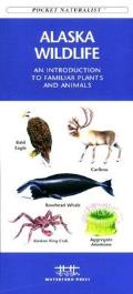 Arizona Birds: A Folding Pocket Guide to Familiar Species
