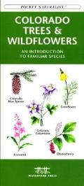Eastern Coastal Birds: An Introduction to Familiar Species
