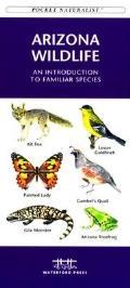 California Seashore Life An Introduction To F