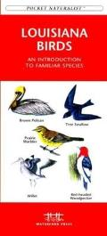 Maine Birds (Pocket Naturalist)