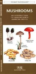 Freshwater Fishes An Introduction to Familiar North American Species
