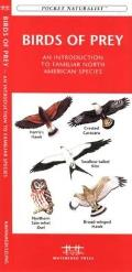Medicinal Plants: An Introduction to Familiar North American Species (Pocket Naturalist) Cover