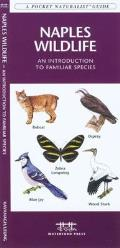 Tampa Bay Birds: An Introduction to Familiar Species (Pocket Naturalist)