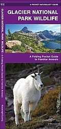 Glacier National Park Wildlife: An Introduction to Familiar Species