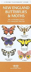 New England Butterflies & Moths: An Introduction to Familiar Species (Pocket Naturalist)