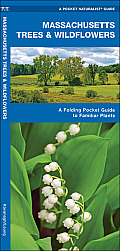 Massachusetts Trees & Wildflowers: An Introduction to Familiar Species (Pocket Naturalist Guides)