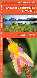Maine Butterflies & Moths: An Introduction to Familiar Species