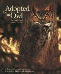 Adopted by an Owl The True Story of Jackson the Owl