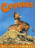 Coyotes (Backyard Animals)