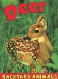 Deer (Backyard Animals)