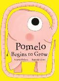 Pomelo Begins to Grow